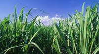 Cargill Organic Sugar